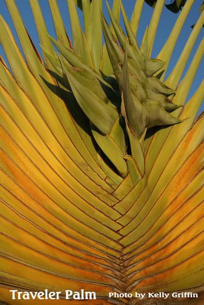 Kelly Griffin: Madagascar - Plantasy Fantasy - Laguna Beach